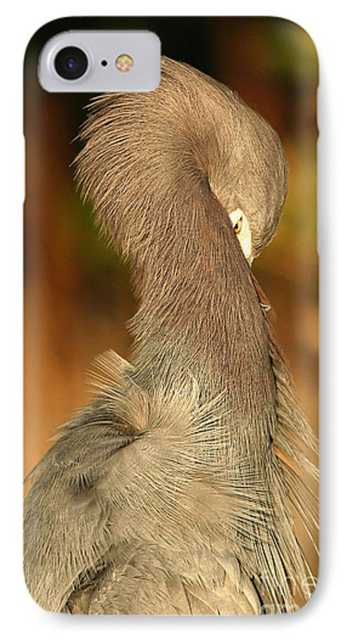 Heron IPhone 7 Case featuring the photograph Little Blue Heron Feeling Bashful by Max Allen
