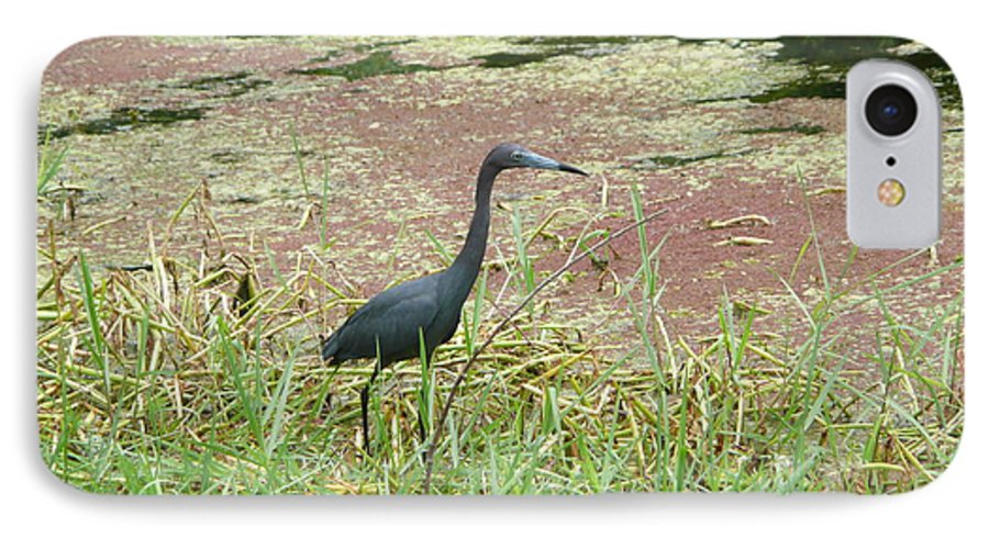 Nature IPhone 7 Case featuring the photograph Little Blue Heron by Kathy Schumann