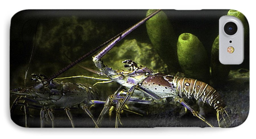 Lobster IPhone 7 Case featuring the photograph Lobster In Love by Marilyn Hunt