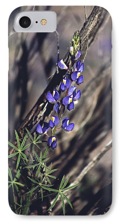 Flower IPhone 7 Case featuring the photograph Lonely Lupine by Randy Oberg