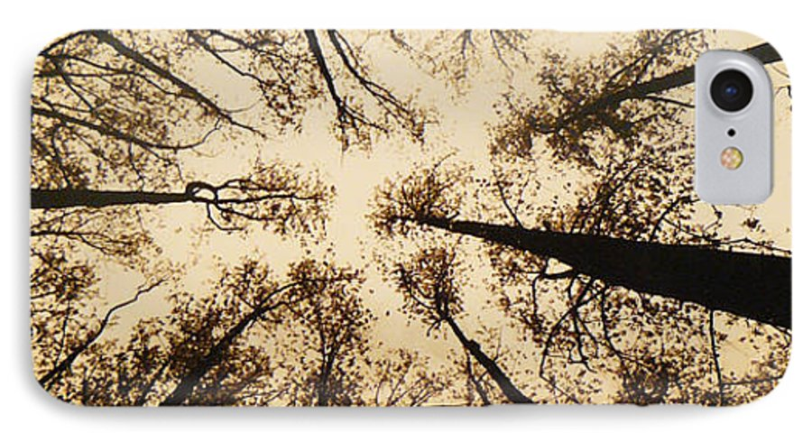 Trees IPhone 7 Case featuring the photograph Looking Up by Jack Paolini