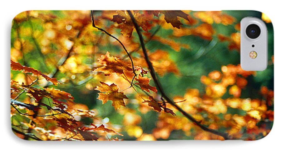 Fall Color IPhone 7 Case featuring the photograph Lost In Leaves by Kathy McClure