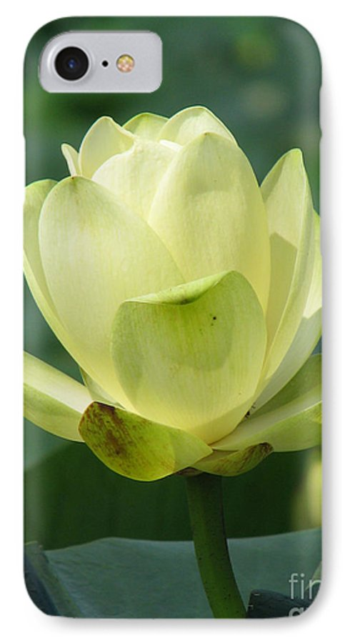 Lotus IPhone 7 Case featuring the photograph Lotus by Amanda Barcon