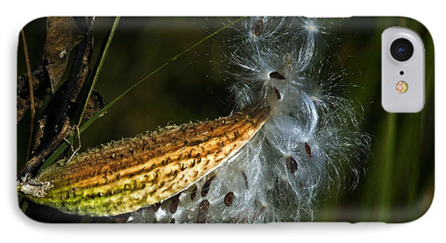 Autumn IPhone 7 Case featuring the photograph Milkweed Pod by Al Mueller