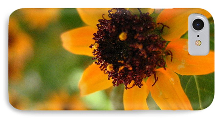 Flower IPhone 7 Case featuring the photograph Mini Sunflower by Melissa Parks