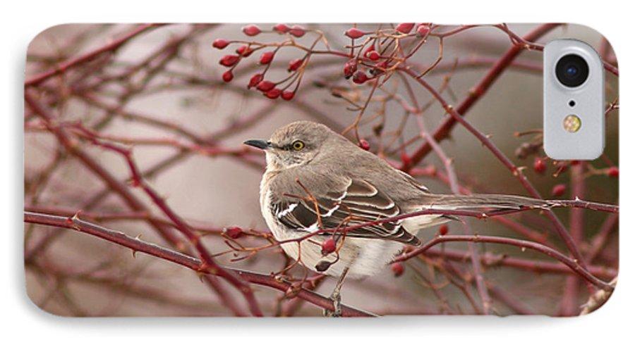 Mockingbird IPhone 7 Case featuring the photograph Mockingbird In Winter Rose Bush by Max Allen