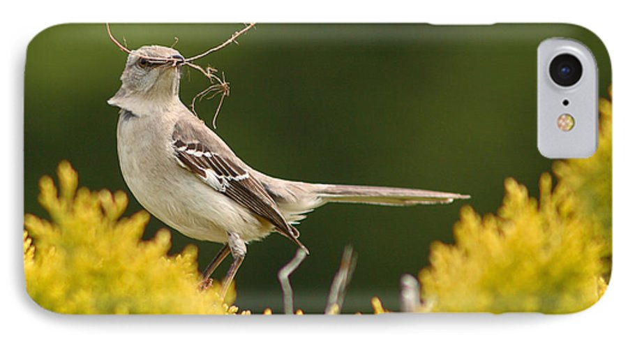 Mockingbird IPhone 7 Case featuring the photograph Mockingbird Perched With Nesting Material by Max Allen