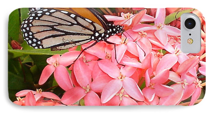 Butterfly IPhone 7 Case featuring the photograph Monarch On Huneysuckle by Chandelle Hazen