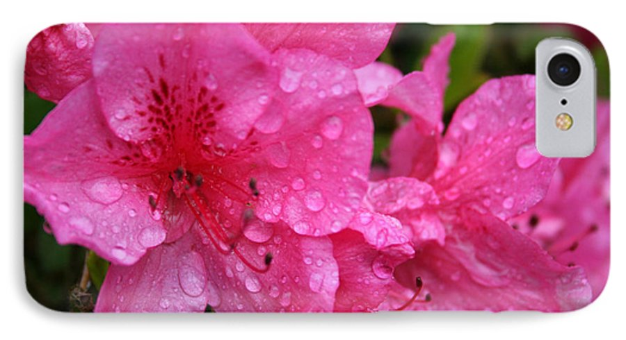 Azaleas IPhone 7 Case featuring the photograph Morning Dew by Mary Gaines