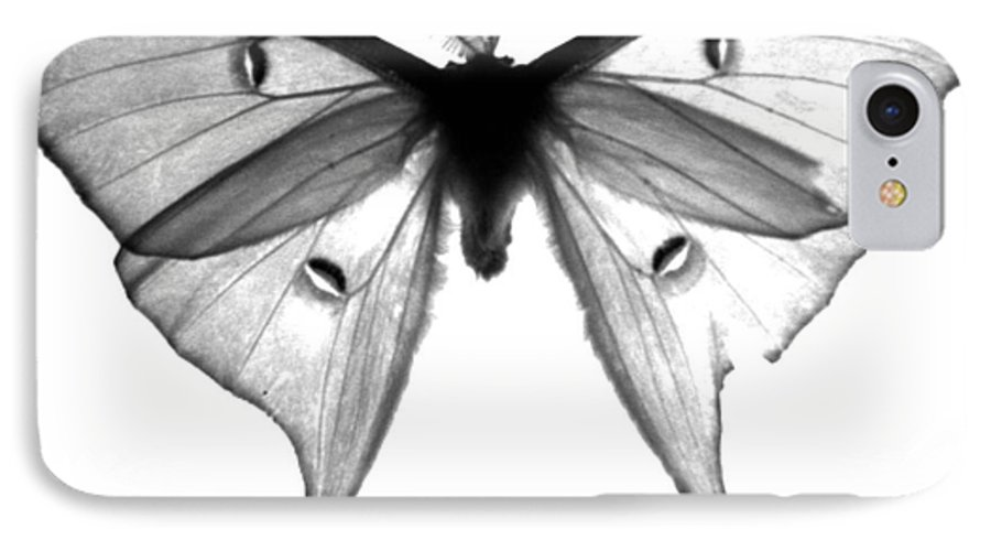 Moth IPhone 7 Case featuring the photograph Moth by Amanda Barcon