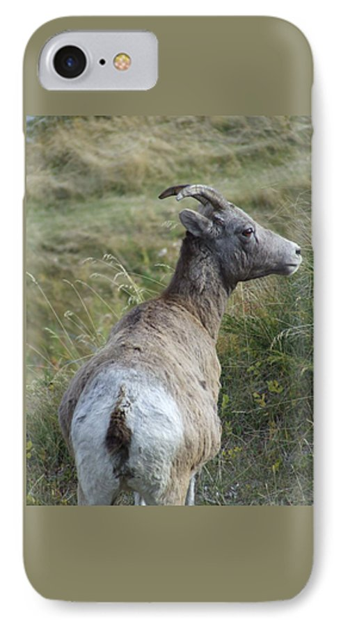 Bighorn Sheep IPhone 7 Case featuring the photograph Mother Bighorn by Tiffany Vest