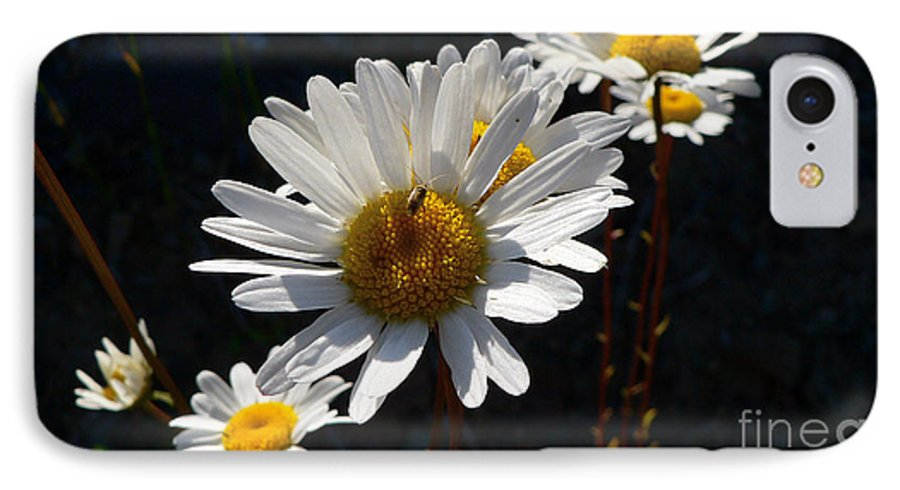 Flowers IPhone 7 Case featuring the photograph Mountain Daisy by Larry Keahey