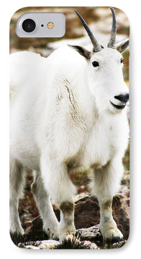 Animal IPhone 7 Case featuring the photograph Mountain Goat by Marilyn Hunt