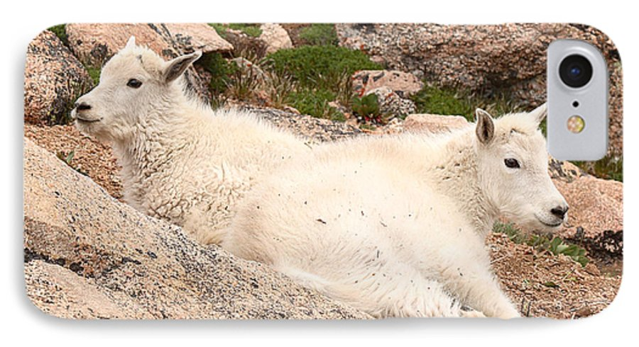 Mountain Goat IPhone 7 Case featuring the photograph Mountain Goat Twins by Max Allen