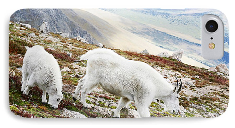 Mountain IPhone 7 Case featuring the photograph Mountain Goats 1 by Marilyn Hunt