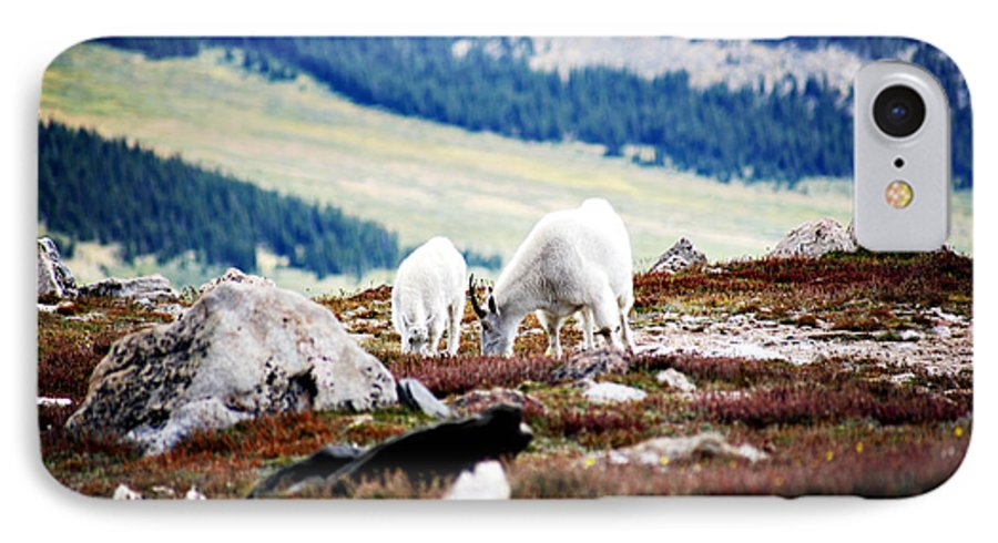 Animal IPhone 7 Case featuring the photograph Mountain Goats 2 by Marilyn Hunt