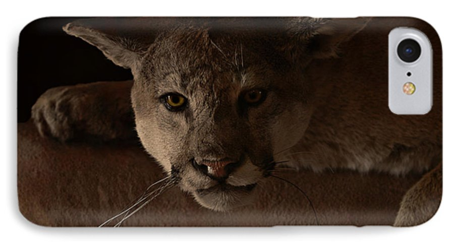 Cougar IPhone 7 Case featuring the photograph Mountain Lion A Large Graceful Cat by Christine Till