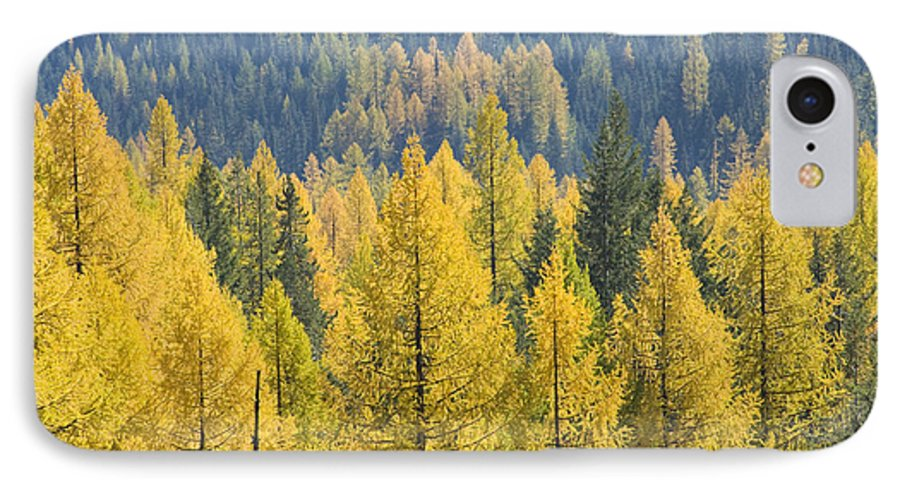 Trees IPhone 7 Case featuring the photograph North Idaho Gold by Idaho Scenic Images Linda Lantzy