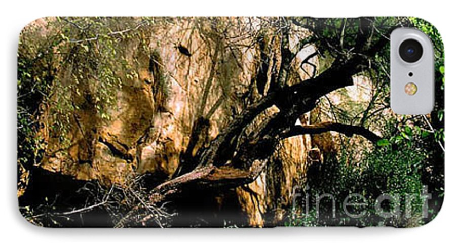 Trees IPhone 7 Case featuring the photograph Old Tree by Kathy McClure