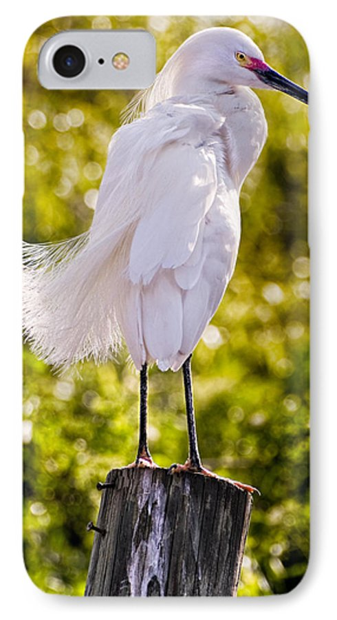 snowy Egret IPhone 7 Case featuring the photograph On Watch by Christopher Holmes