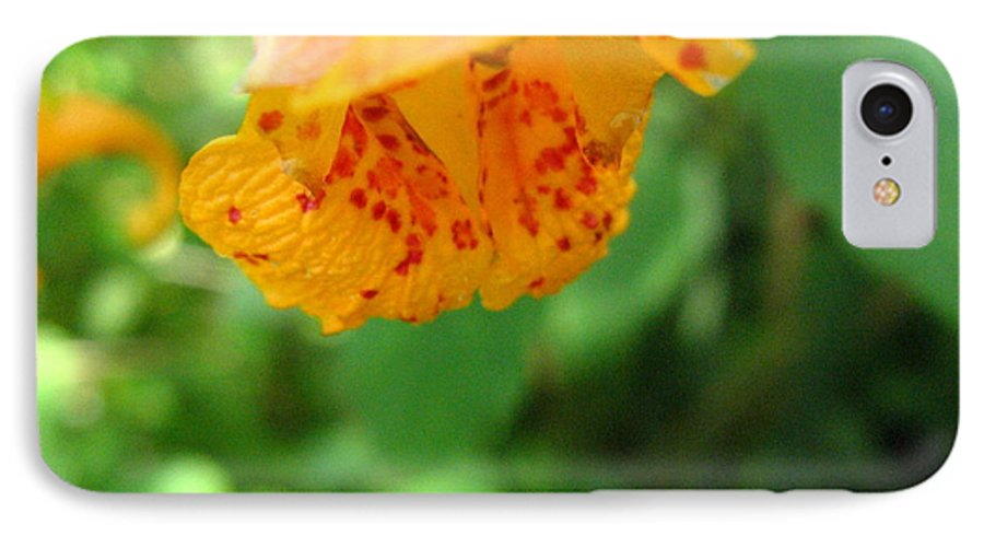 Flower IPhone 7 Case featuring the photograph Orange Flower by Melissa Parks