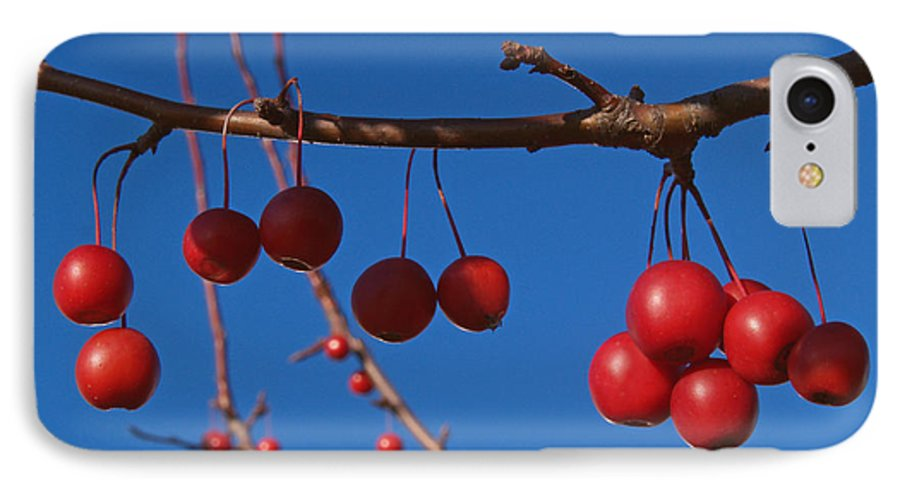 Autumn IPhone 7 Case featuring the photograph Ornamental Crabapple Branch by Anna Lisa Yoder