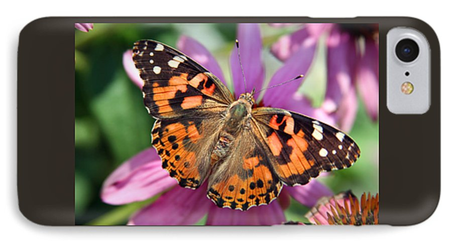 Painted Lady IPhone 7 Case featuring the photograph Painted Lady Butterfly by Margie Wildblood