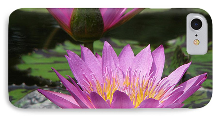 Lillypad IPhone 7 Case featuring the photograph Peaceful by Amanda Barcon