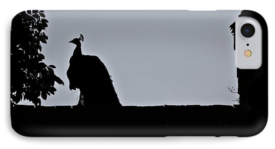 Peacock IPhone 7 Case featuring the photograph Peacock At Night by Douglas Barnett