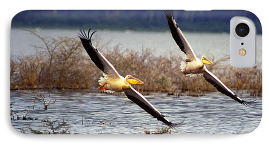 Birds IPhone 7 Case featuring the photograph Pelicans In Flight by Carl Purcell