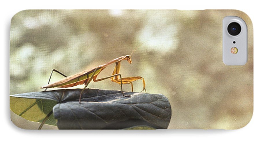 Praying IPhone 7 Case featuring the photograph Pensive Mantis by Douglas Barnett