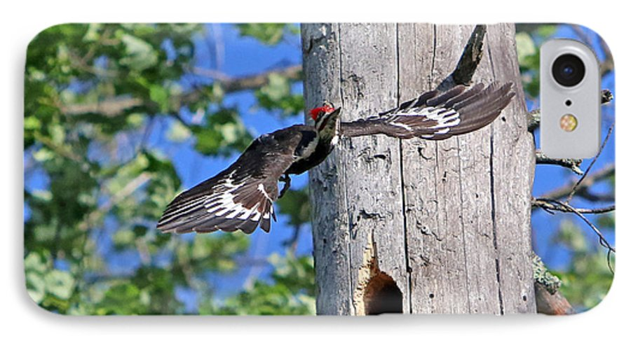 Woodpecker IPhone 7 Case featuring the photograph Pileated #27 by James F Towne