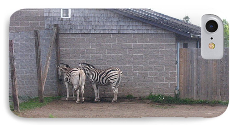 Zebra IPhone 7 Case featuring the photograph Plains Zebras In The Corner by Melissa Parks