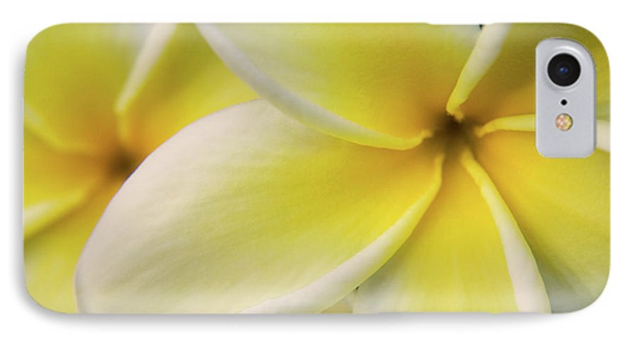 Nature IPhone 7 Case featuring the photograph Plumeria Flowers by Julia Hiebaum