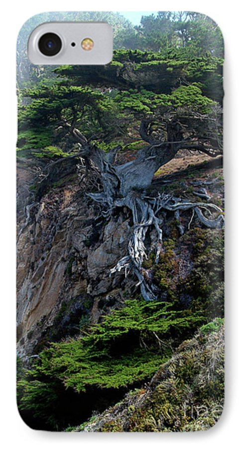 Landscape IPhone 7 Case featuring the photograph Point Lobos Veteran Cypress Tree by Charlene Mitchell