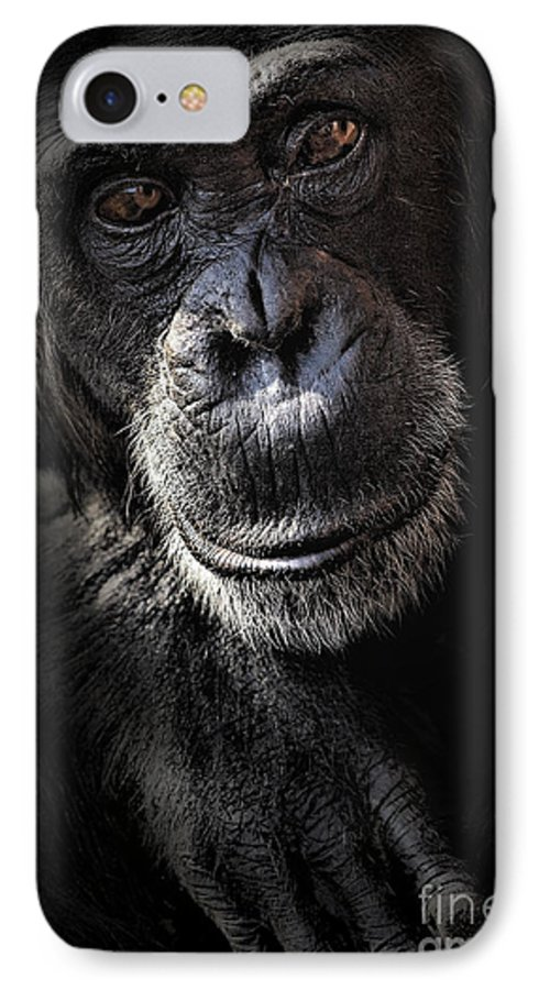 Chimp IPhone 7 Case featuring the photograph Portrait Of A Chimpanzee by Sheila Smart Fine Art Photography