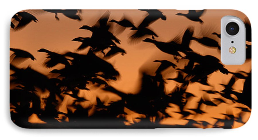 Geese IPhone 7 Case featuring the photograph Pre-dawn Flight Of Snow Geese Flock by Max Allen