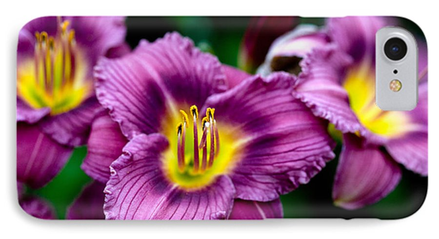 Flower IPhone 7 Case featuring the photograph Purple Day Lillies by Marilyn Hunt