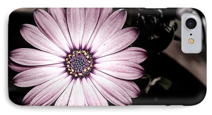 Flower IPhone 7 Case featuring the photograph Purple Flower by Al Mueller