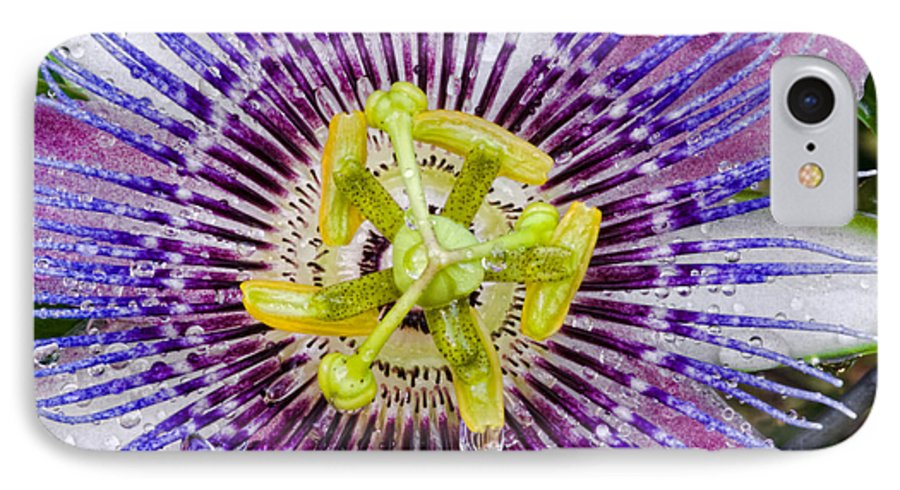 Passion IPhone 7 Case featuring the photograph Purple Radial by Christopher Holmes