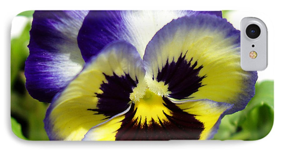 Pansy IPhone 7 Case featuring the photograph Purple White And Yellow Pansy by Nancy Mueller