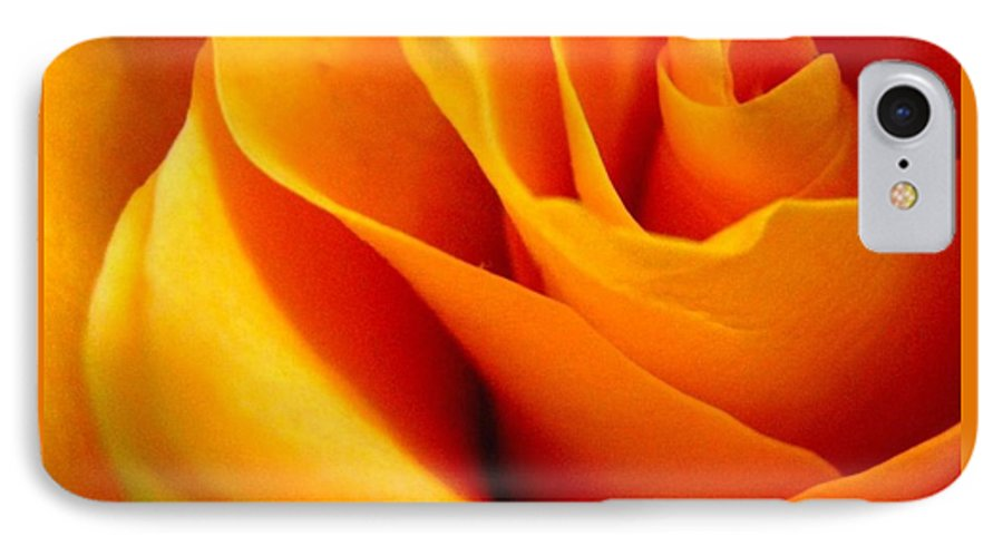 Rose IPhone 7 Case featuring the photograph Queen Rose by Rhonda Barrett