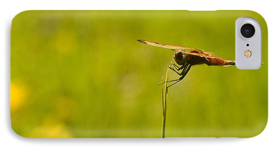 Dragonfly IPhone 7 Case featuring the photograph Ready For Flight by Douglas Barnett