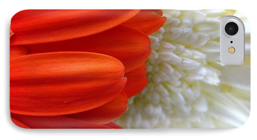 Flowers IPhone 7 Case featuring the photograph Red And White by Rhonda Barrett