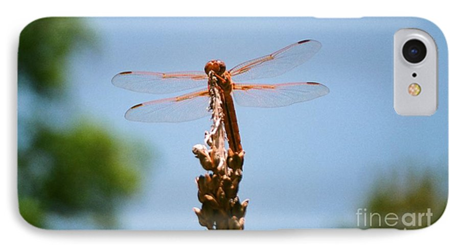 Dragonfly IPhone 7 Case featuring the photograph Red Dragonfly by Dean Triolo