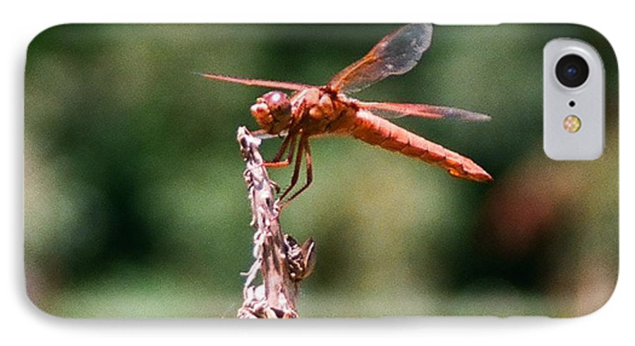 Dragonfly IPhone 7 Case featuring the photograph Red Dragonfly II by Dean Triolo
