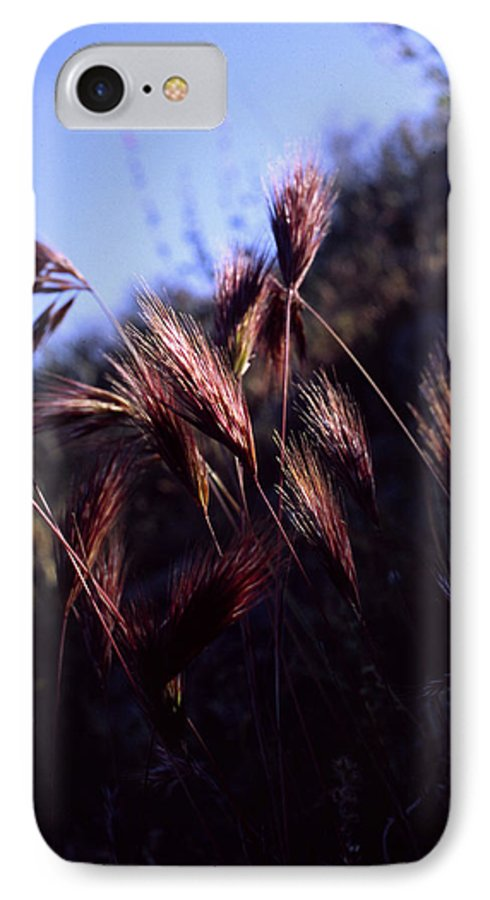 Nature IPhone 7 Case featuring the photograph Red Feathers by Randy Oberg