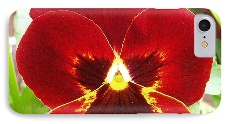 Red IPhone 7 Case featuring the photograph Red Pansy by Nancy Mueller
