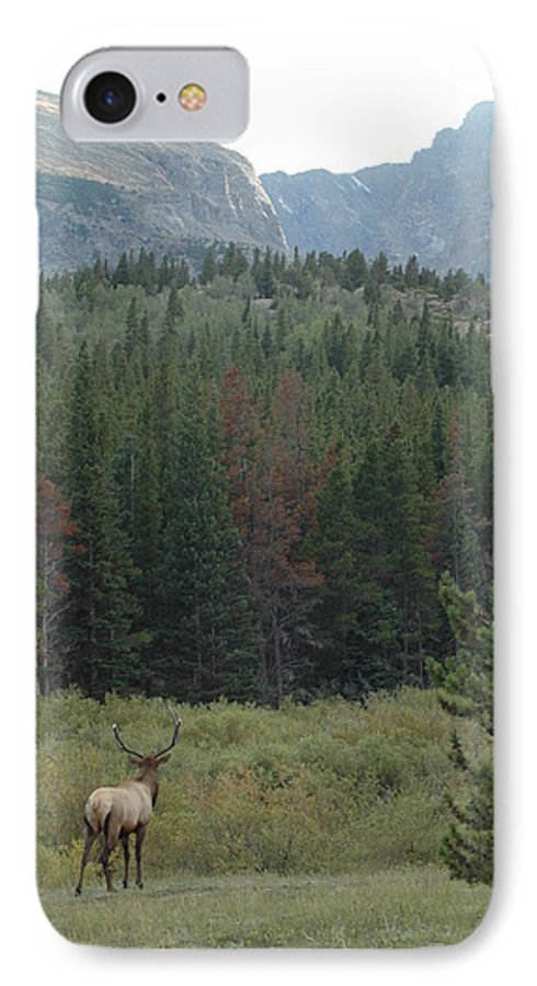 Elk IPhone 7 Case featuring the photograph Rocky Mountain Elk by Kathy Schumann