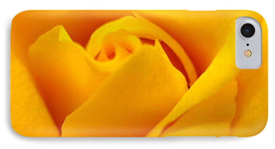 Rose IPhone 7 Case featuring the photograph Rose Yellow by Rhonda Barrett